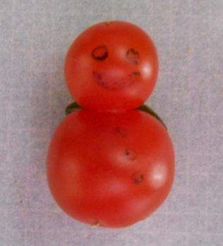 Tomato Snowman